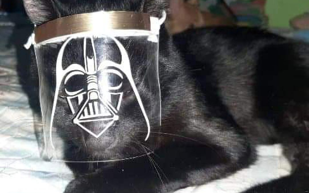 PHOTOS: These masks are the cat's meow