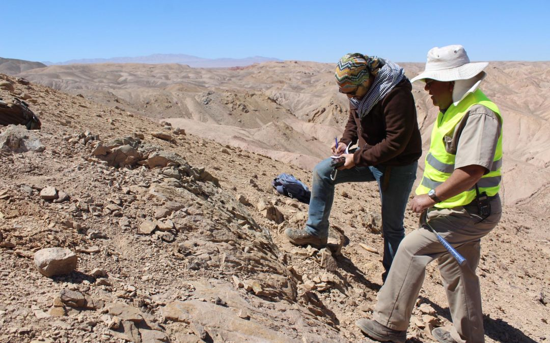 The Real Jurassic Park: Marine Fossils Discovered In Chilean Desert
