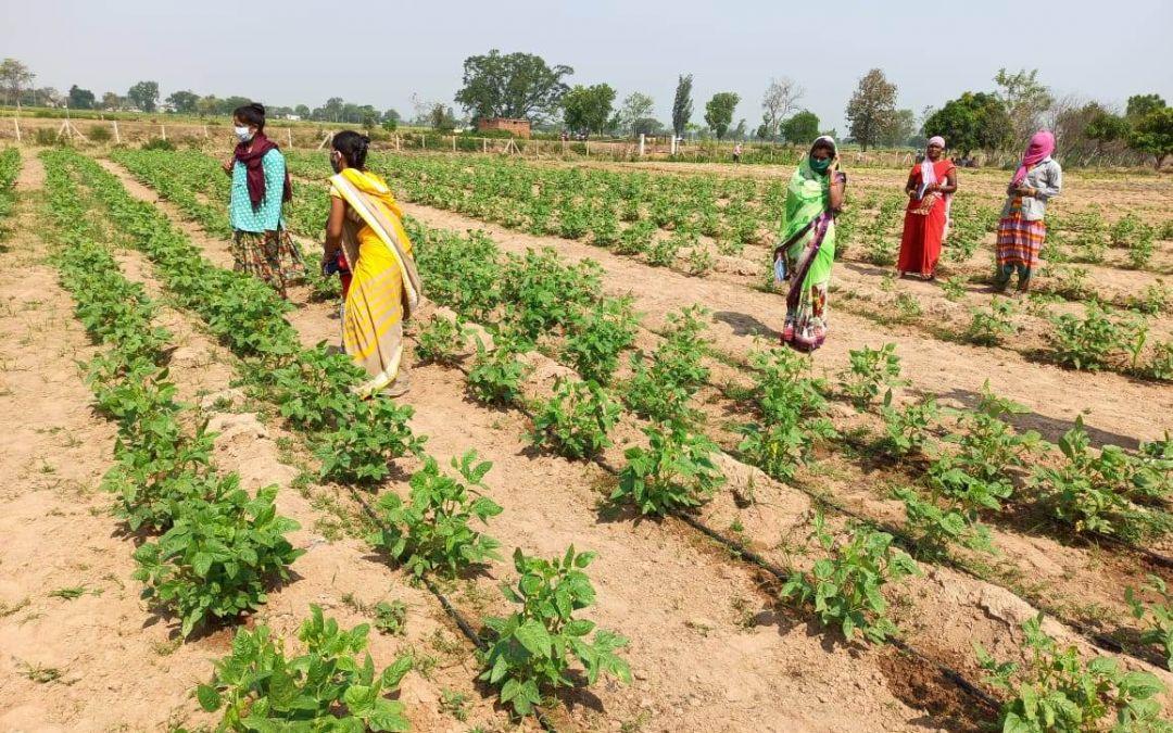India Gauges Herd Immunity