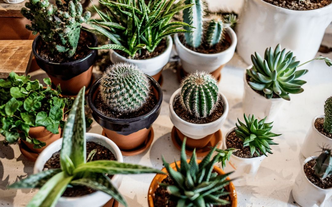 5 Indoor Plants You Absolutely Need in Your Home