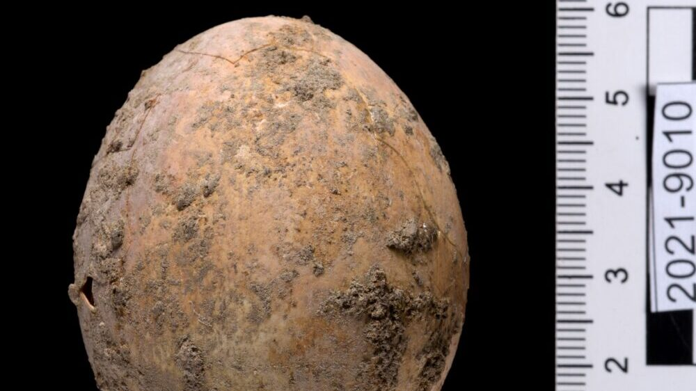 The egg from the Yavneh excavation. (Dafna Gazit/Israel Antiquities Authority)