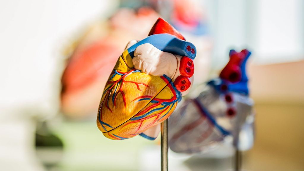 br(Representative image) The heart receives a stress signal from fat cells and immediately builds a defense against a syndrome that results in cellular dysfunction and death, according to a new study led by researchers at the University of Texas Southwestern Medical Center. (Jesse orrico/Unsplash)
