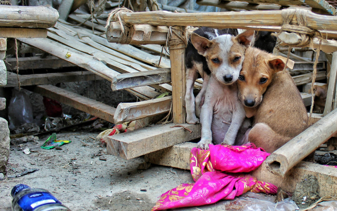 63-year-old Indian Animal Activists Splurges Around $806 A Month To Feed Strays
